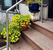 Die Edelstahlschlosserei Nappenfeld aus Mülheim an der Ruhr fertigte einen Edelstahl-Handlauf in gebürsteter Ausführung für eine kleine Gartentreppe